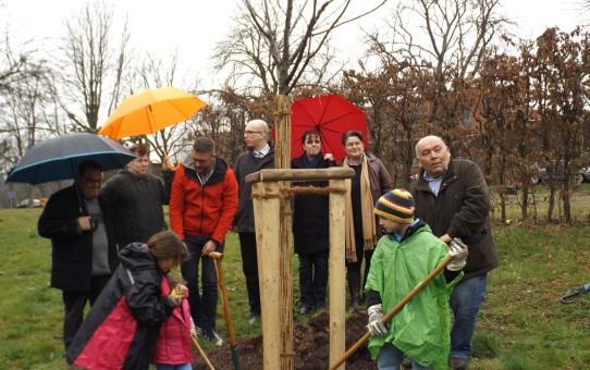 Regen für den Baum der Integration ... Gut fürs Wachstum